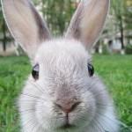X-Rabbit
